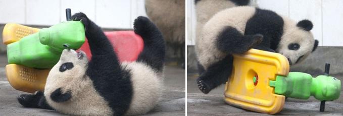 panda-i-loshadka