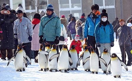 pingvinya-progylka