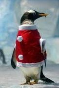 pingvini-na-rabote-y-dm