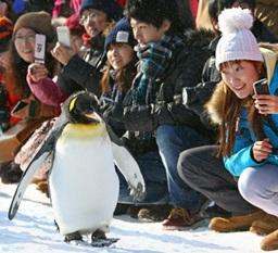 pingvinya-progylka-1