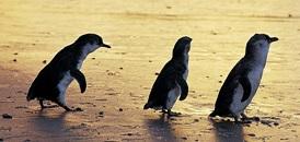 spasaem-pingvinov